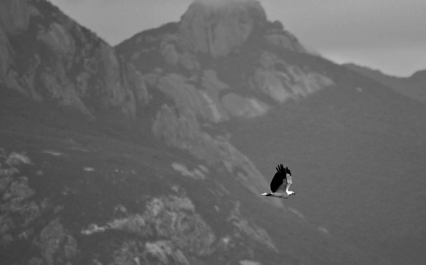 Wild Flinders