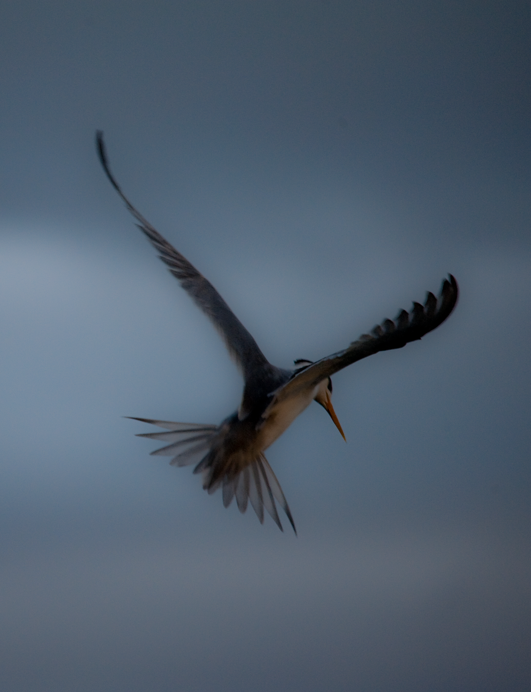 Storm Tern 10