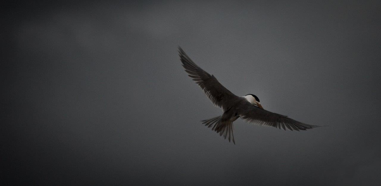 Storm Tern 6