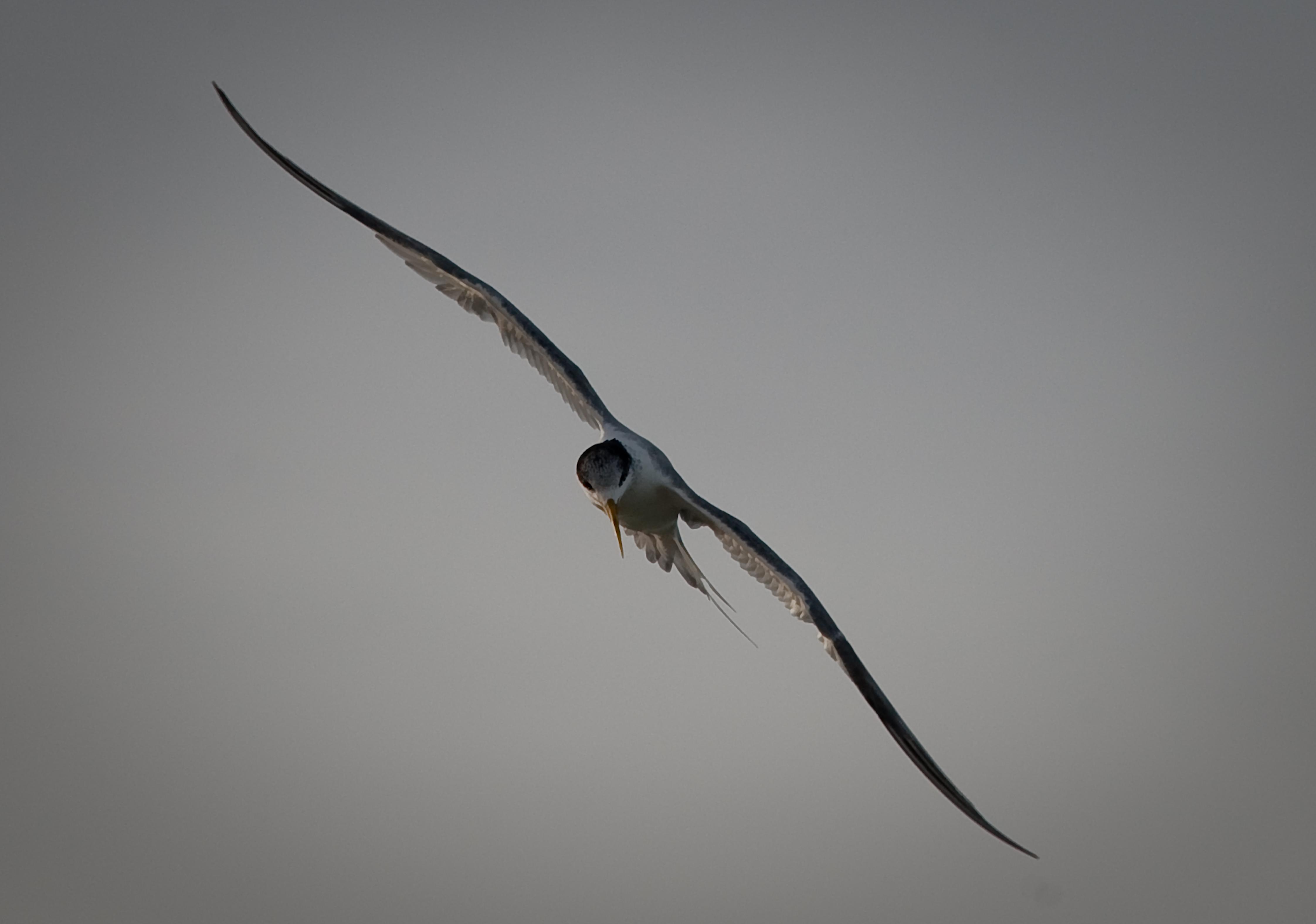 Storm Tern 4