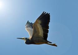 Painted Flight