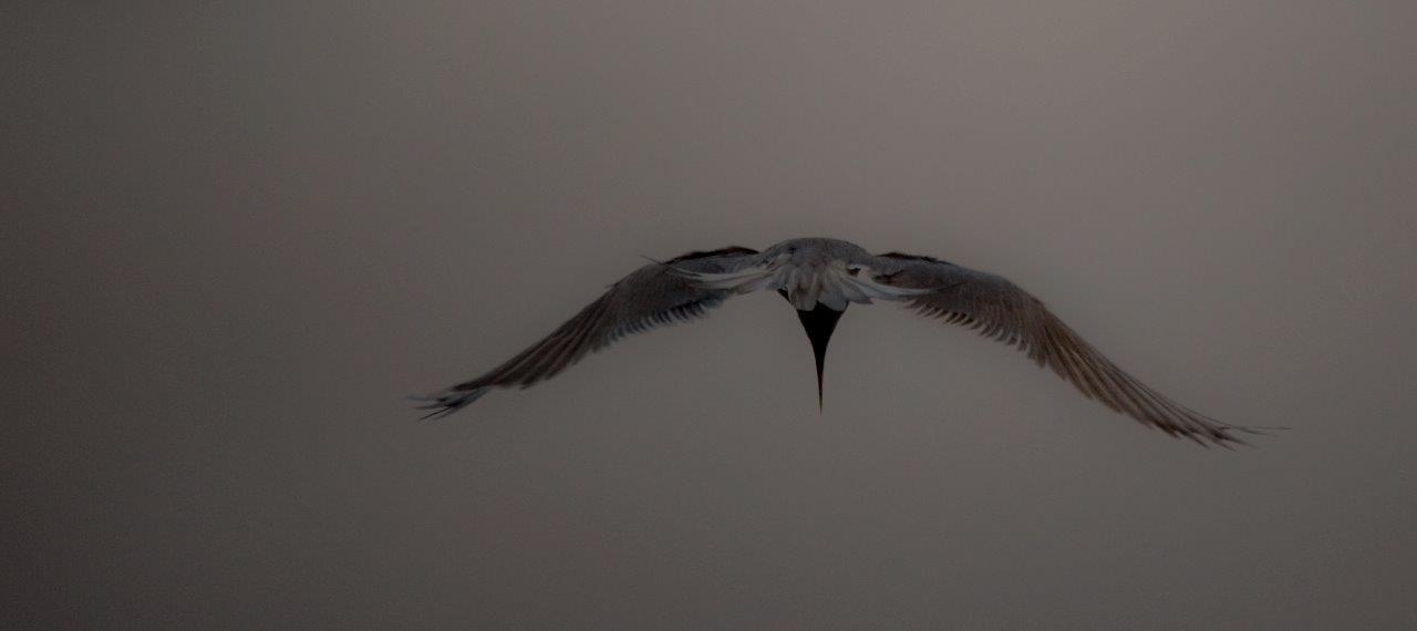 Storm Tern 3