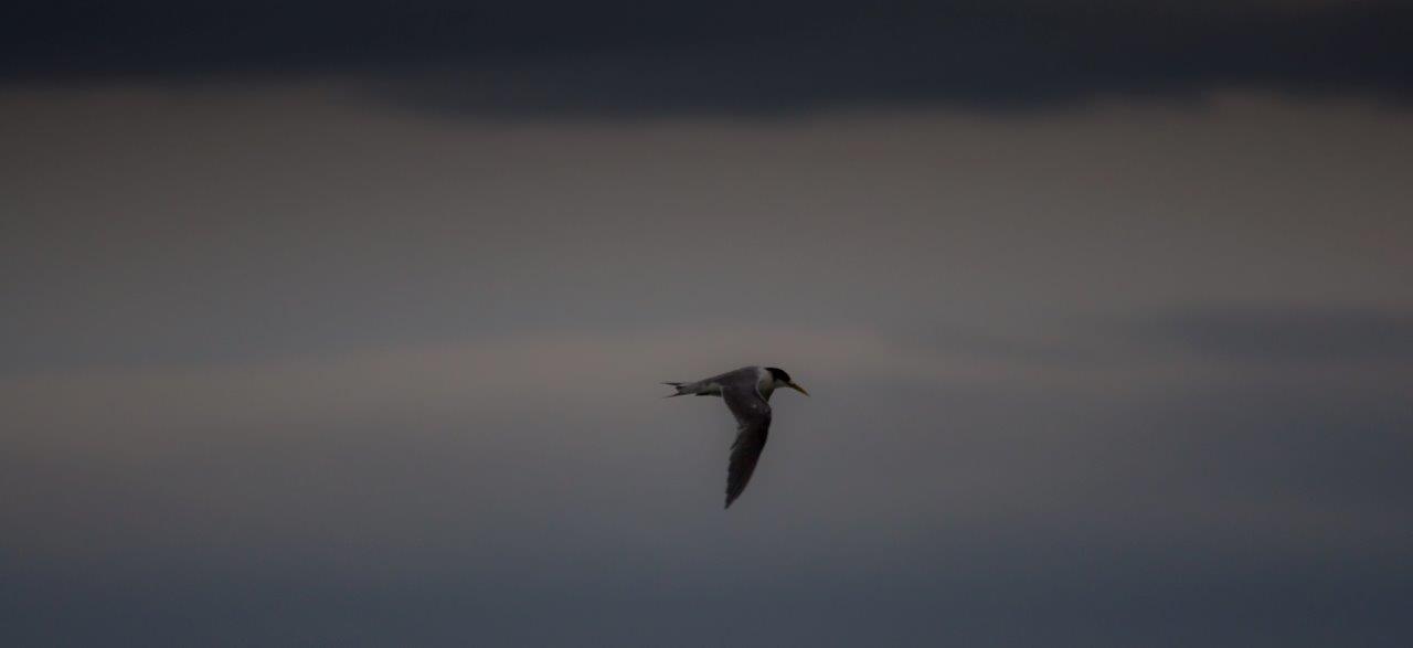 Storm tern 9