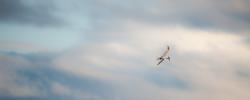 Storm Tern 11