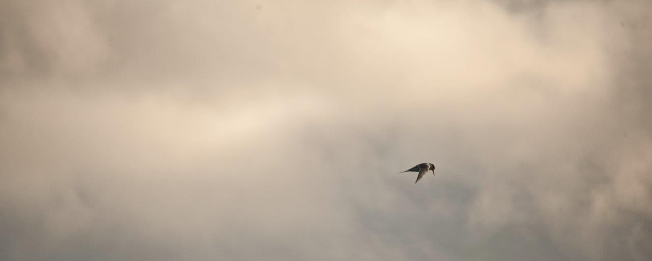 Storm Tern 7