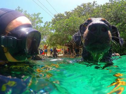Scuba diving with your dog in Casa cenote near Tulum, Mexico