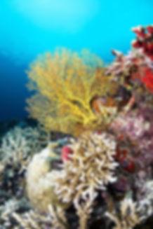 A beautiful coral reef enjoyed while diving Playa del Carmen