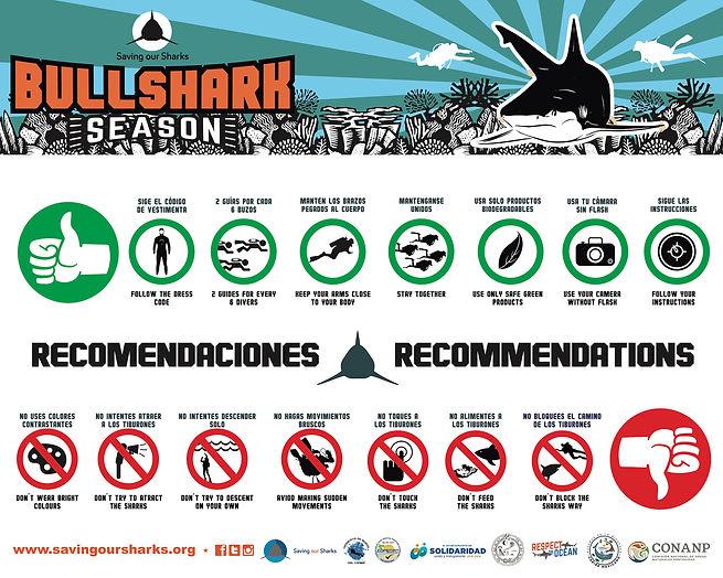 The rules for bull shark diving in Playa del Carmen