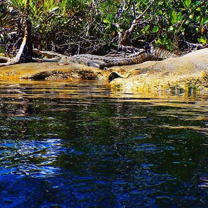 Diving with crocodiles in Casa cenote