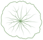 cap_icon-without-background.png