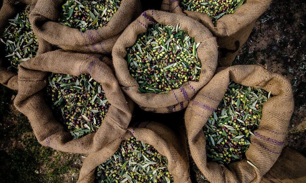 sacks-of-olives-1500x900.jpg