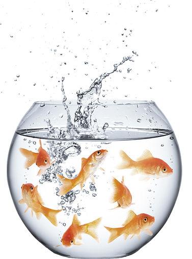 fishes bowl.jpg