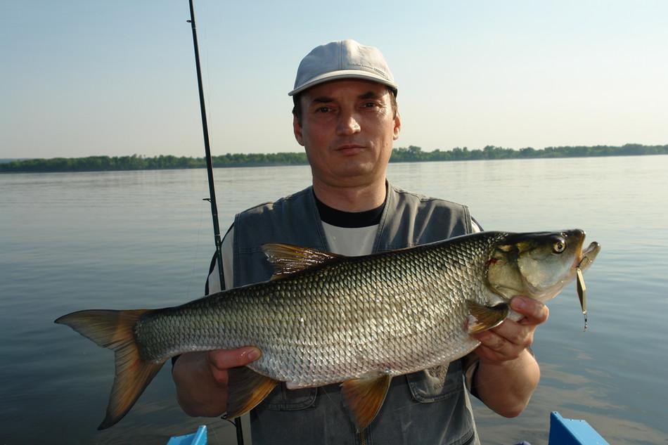 «И снова жерех бьет», (Рыболов-Elite 3/2007)