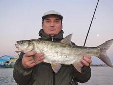 «Ловим спиннингом… на балансир», (Спортивное рыболовство, 3/2008)