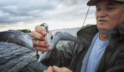 Блесна Крылатка-Т чайка