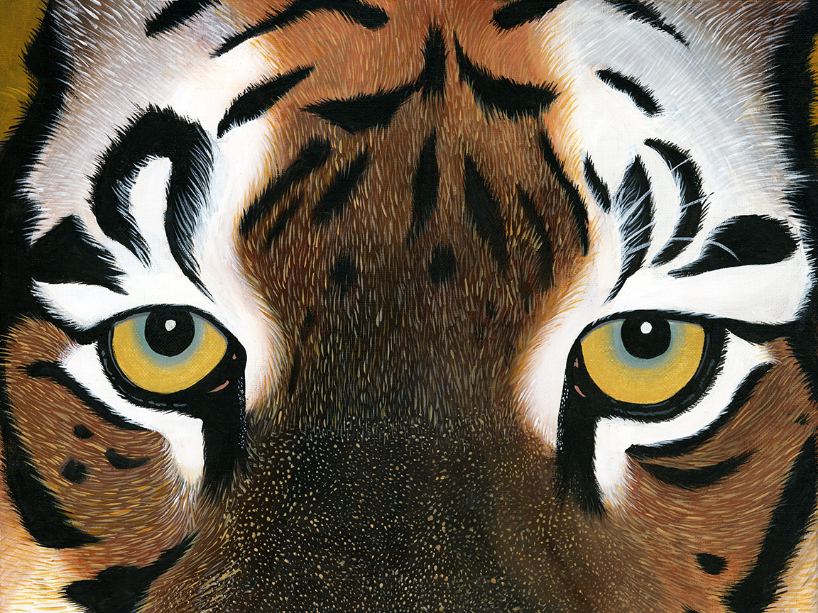 tiger-fin