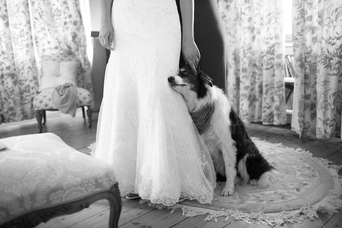 Dog at wedding, Dog ringbearer, Dog wedding, Doggy chauffeur