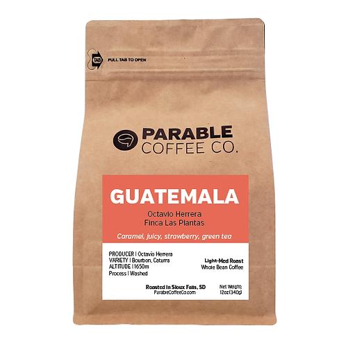 Guatemala Finca Las Plantas