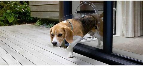 PET DOOR.jpg