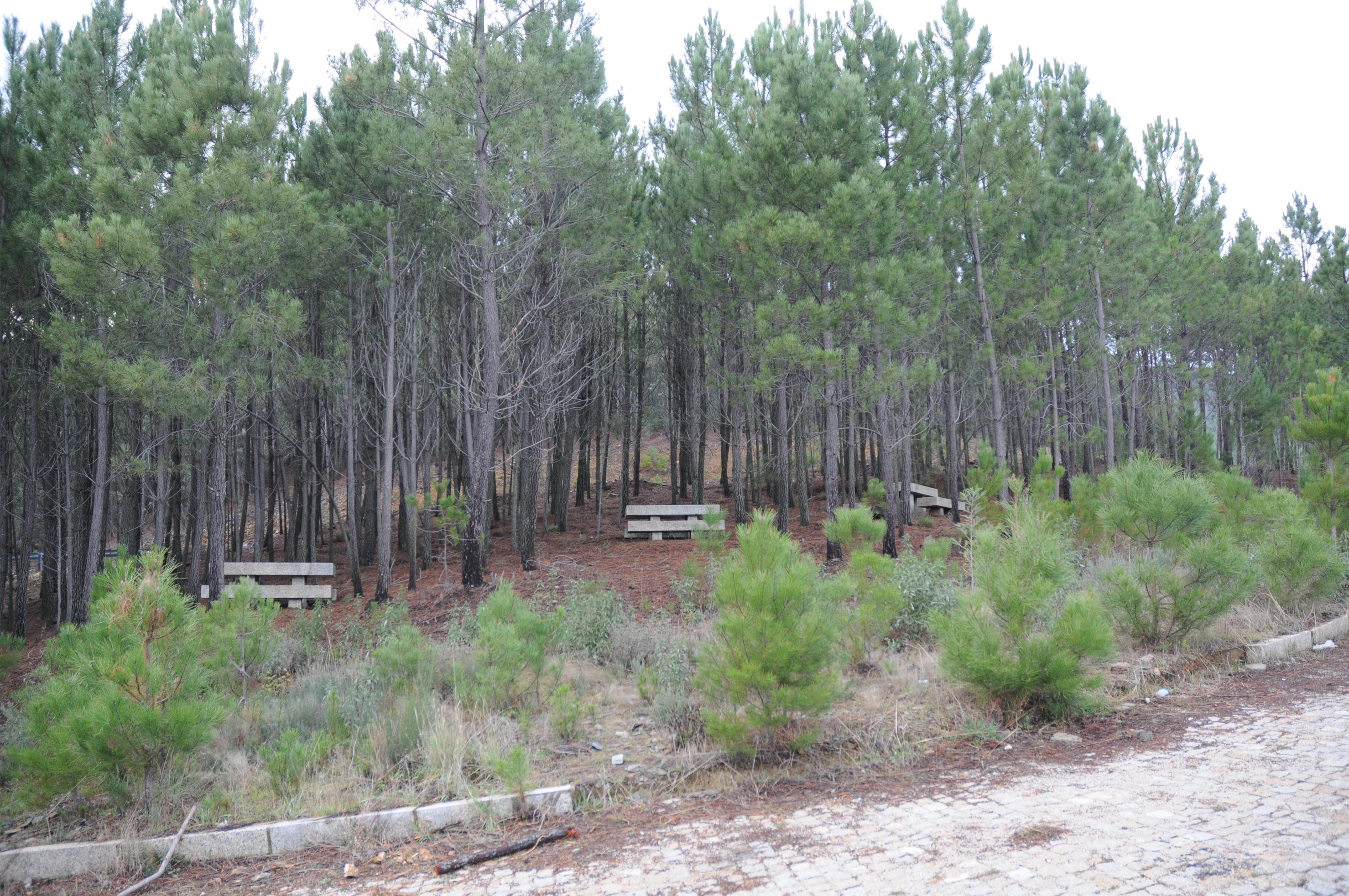 Parque merendas serra da contenda