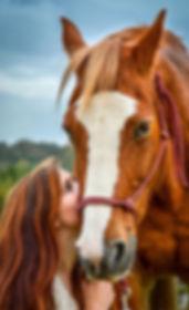 equine photo shoot horses