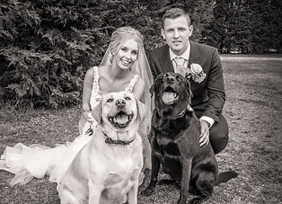 Bride and Groom with their Labradors Wedding Photography Essex
