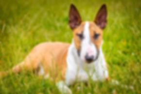 Pet Portrait Photography Kent