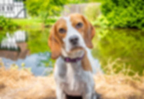 Dog Photo Shoot Portrait Photography Kent