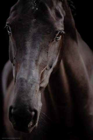 equine fine art