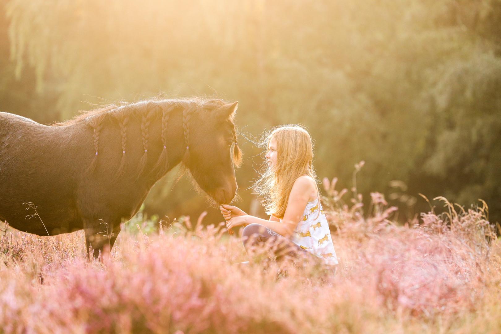 paardenfotografie