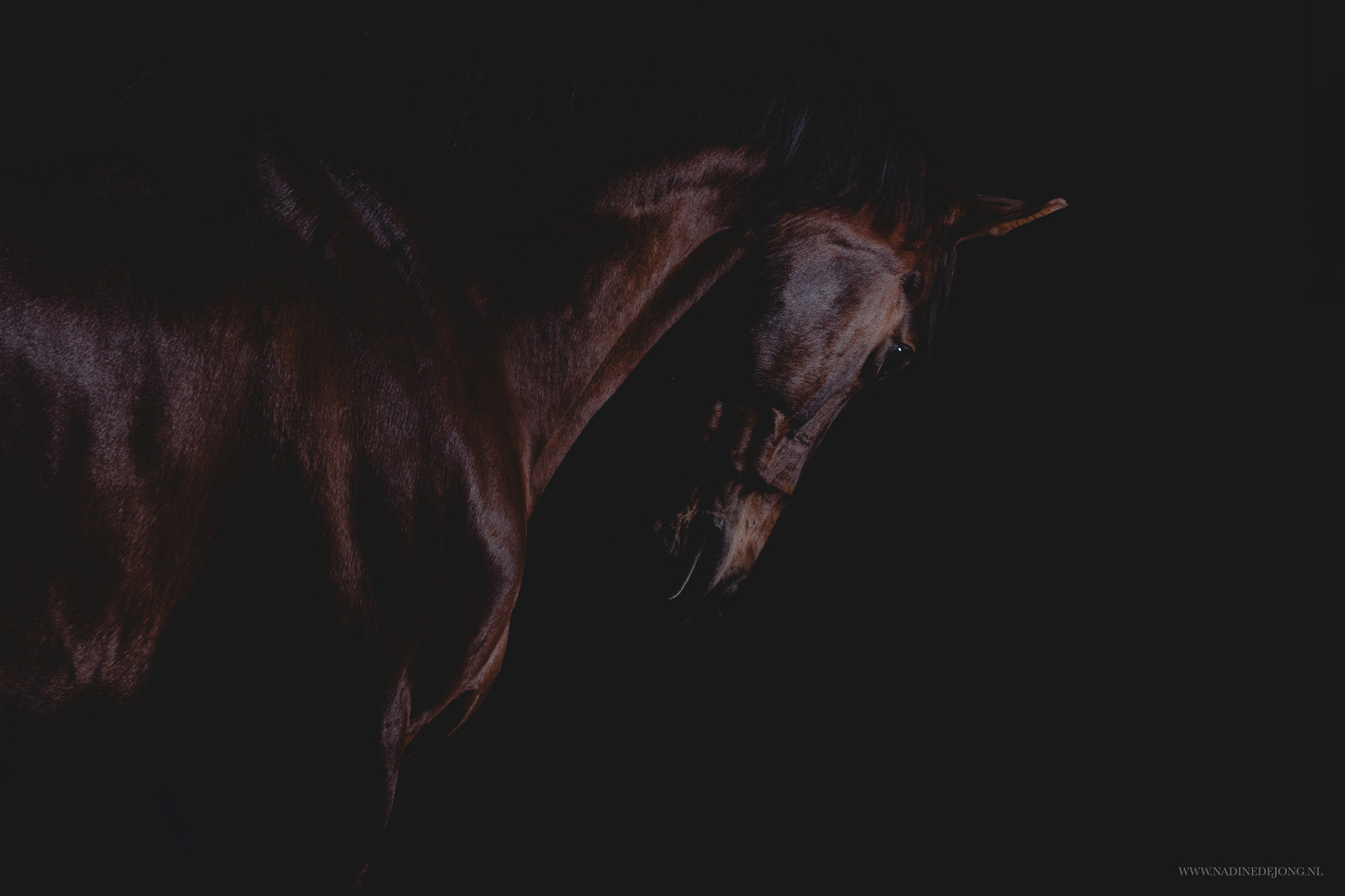 fine art paardenfotografie