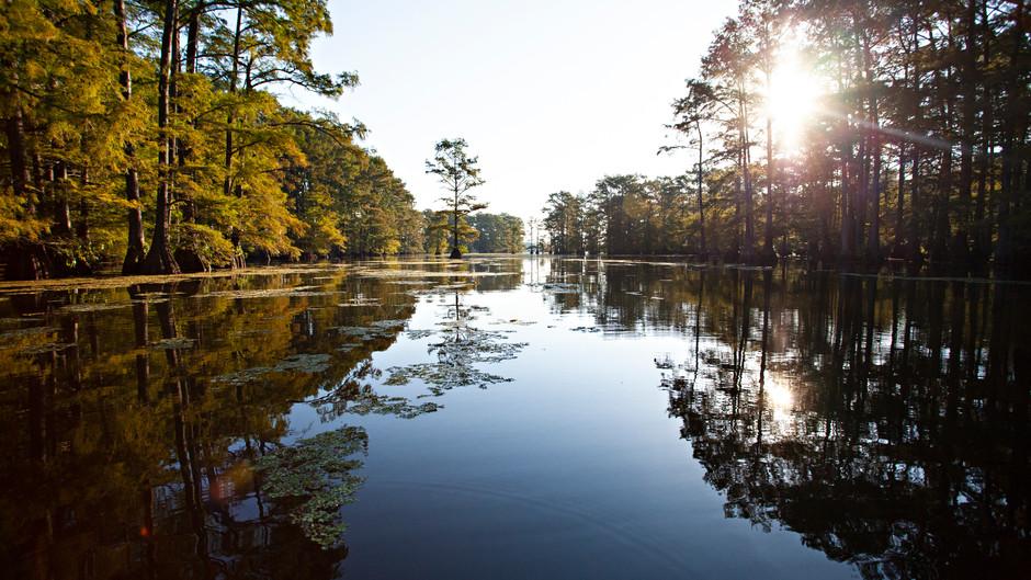 Swamp Kayaking in Louisiana