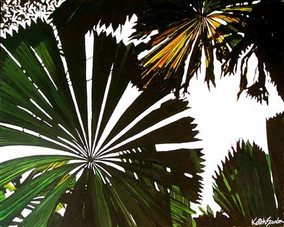 Licuala canopy  2  75x60 - Copy.jpg