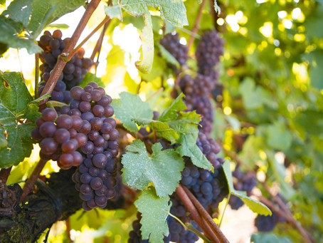 Vineyards for sale in Yamhill County