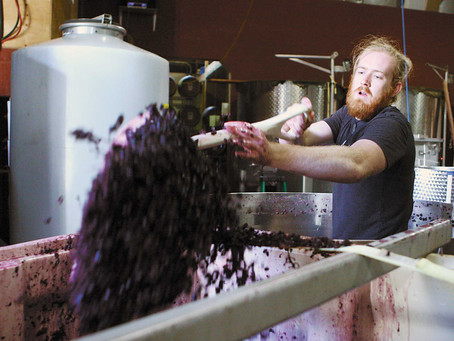 Winemaking in the pinot quarter