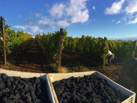 Harvest time in the valley!