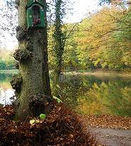Forêt de Soignes, à l'endroit où Ruysbroeck venait prier