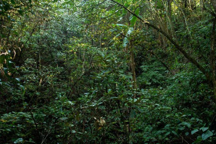 Mishmi Hills forest Arunachal Pradesh Dibang Valley Arjun Kamdar