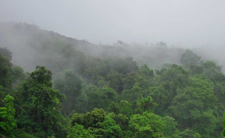 The cloud forest of the Western Ghats on the most clear of all days in the monsoon