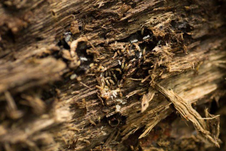 termites devour eat a fallen log in the terai arjun kamdar