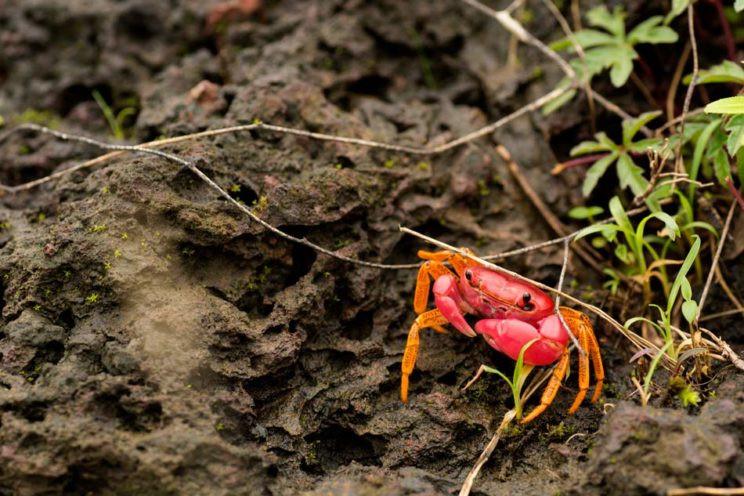 Ghatiana splendida in situ habitat shot Western Ghats
