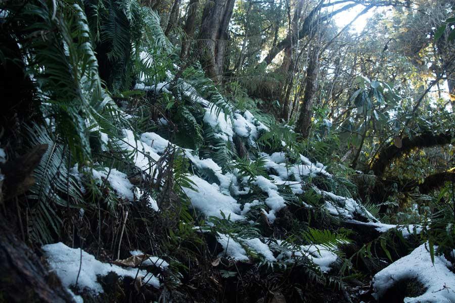 Mishmi hills snow trekking dibang valley Arjun Kamdar