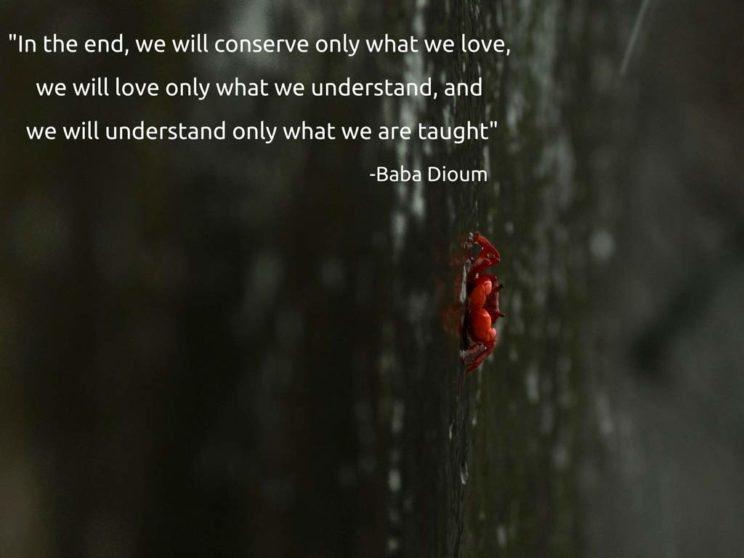 Quote by Baba Dioum