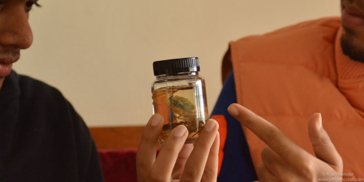 Crab specimen preserved in alcohol new species of crab discovered western ghats india arjun kamdar tejas thackeray