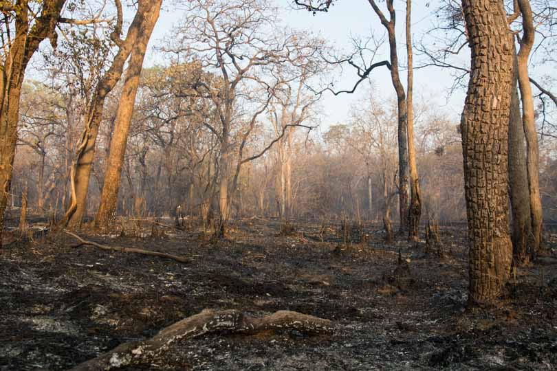 fire deciduous forest burning smoke eastern ghats telangana amrabad tiger reserve arjun kamdar
