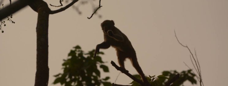A rhesus macaque arjun kamdar katerniaghat wildlife sanctuary