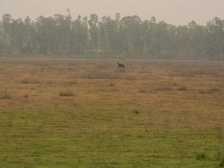 Tales from the terai: the field station