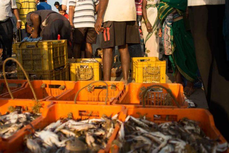 fish market maharashtra malvan