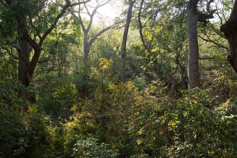 river ravine eastern ghats telangana amrabad tiger reserve arjun kamdar