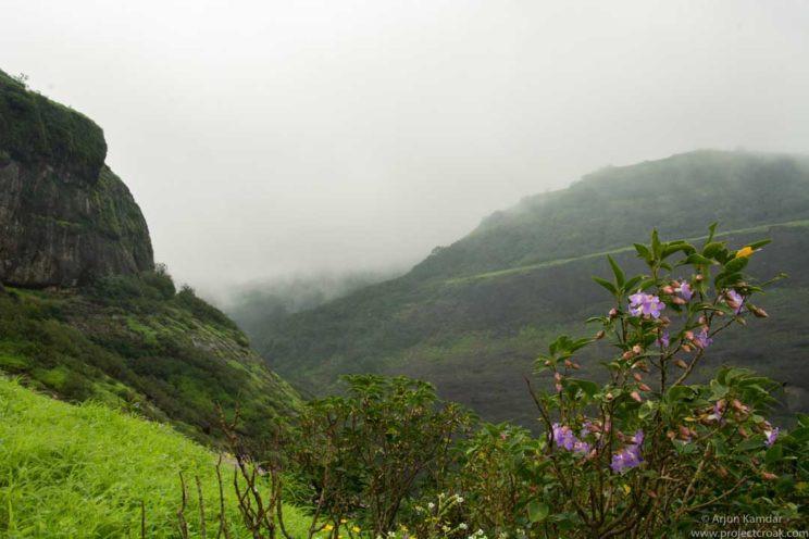Sky island theory karvi flowers western ghats arjun kamdar